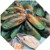 NZ Green shell mussels